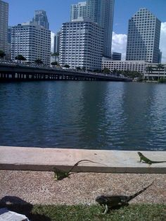 Miami....what's not to love here?  I went to Little Havana last time.  That was a real experience.