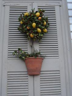 Colonial Williamsburg Lemon Tree Wreath