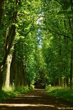 Forstbotanischer Garten Eberswalde