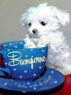 Immagini buongiorno con i cuties - BellissimeImmagini.it Good Morning Sister, Good Morning Quotes, Dementia Quotes, Spanish Greetings, Italian Memes, Italian Life, Happy Fun, New Years Eve Party, Friendship Quotes