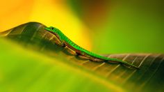 gecko by on DeviantArt Reptiles And Amphibians, Mammals, Les Seychelles, Vertebrates, Under The Sea, Great Photos, Online Art Gallery, Creatures, Deviantart