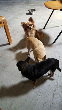 Loulou, Buddy en Fido