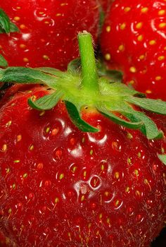 Strawberries - her favourite fruit