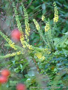 Parfums au jardin, mode hiver - Jura