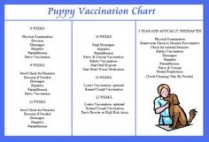 It's just a graphic of Ambitious Puppy Vaccination Schedule Printable