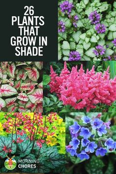 "Do you have a large shaded area in your garden that looks ""dead""? Here are 26 of the most beautiful plants that grow in shade. #GardenIdeas"