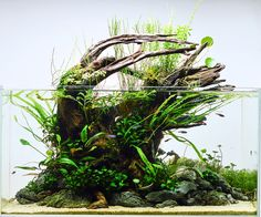 Rolling the Dice – 54l —- a remake of my earlier scape, using the same decor and recycling most of the plants.
