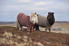 Ponies wearing sweaters