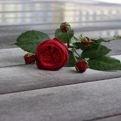 Jessica Zimmerman | zimmermanevents.com  #jessicazimmerman #zimmermanevents #floraldesign #florist #rose