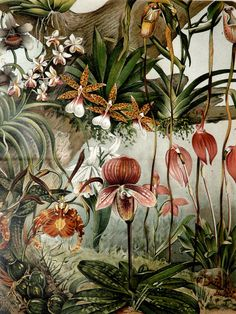 1897 Antique fine lithograph of ORCHIDS. 116 years old gorgeous print.