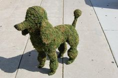 Huxtable The Poodle | Toy Poodle Blog | Parti Poodle: Outdoor Poodle Decor: Topiary, Statues, Door Knockers, and Planters