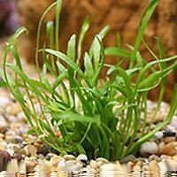 When you are searching for beautiful, low-maintenance plants to decorate your aquarium, try one of these suggestions. With daily, easy care, they will flourish and brighten your aquarium. Add your favorite...