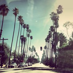 palm-trees-against-blue-skies-in-los-angeles