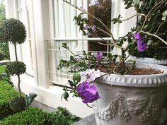 "38 aprecieri, 1 comentarii - perch. (@perchneworleans) pe Instagram: ""Morning color inspiration in my back yard. #spring #purple #green #flower #morning…"""