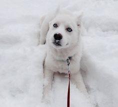 animales_en_la_nieve_3