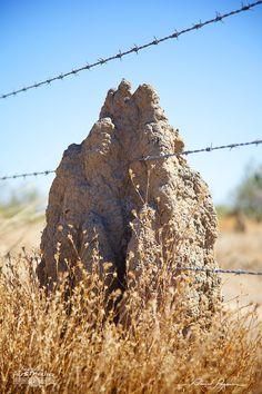 Termitières sur Burke Developmental Rd (Bang Bang) | Termites' nest on Burke Developmental Rd (Bang Bang): http://tazintosh.com #FocusedOn #Photo #Arbre #Tree #Canon EF 24-105mm f/4L IS USM #Canon EOS 5D Mark II #Herbe #Grass #Termitière #Termites nest