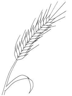 Nature Wheat coloring page for kids, printable free