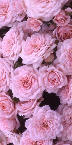 Supreme Wallpaper Pink Aesthetic