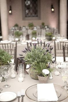 Lavender is a trending color! Consider our lavender wedding decor ideas to give your wedding style a delicate, tender look. Lavender Potted Plant, Potted Plants, Wedding Table Decorations, Wedding Table Settings, Event Planning Design, Wedding Planning, Potted Plant Centerpieces, Lavender Centerpieces, Centrepieces