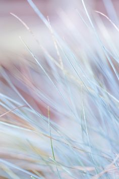Grass abstract. Abstract and colorful close ups
