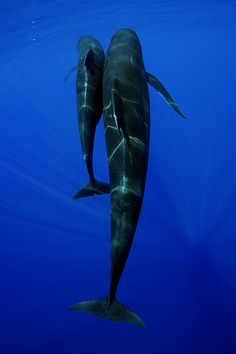 whales... All things were created for Him, by Him and through Him. And in Him all things hold together.