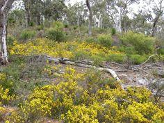 Natural Wildlife & Flora for the Track   The Track   Bibbulmun Track