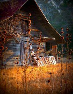 My dream property has a barn. Old barn photography autumn country barn rustic Farm Barn, Old Farm, Country Barns, Country Life, Country Living, Country Roads, Low Country, Country Charm, Barn Pictures