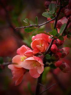 Blooming Flowers, My Flower, Beautiful Flowers, Flower Artwork, Flower Wallpaper, Pink Trees, Soul Art, Seed Pods, Watercolor Flowers
