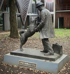 On March a new statue was dedicated to the memory of Hachiko, Japan's most famous dog. [img] For those not familiar with the story: Hachiko. Akita Dog, Dog Pictures, Animal Pictures, Cute Pictures, Hachi A Dogs Tale, Hachiko Statue, Bear Attack, Japanese Dogs, Loyalty