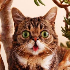 I'm not that into cats..  but I am obsessed with Lil Bub