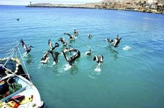 Isla Cedros Baja California