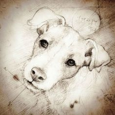 """jack russell drawings   Jack Russell Cocked Head"""" Detail of a Da Vinci style drawing"""