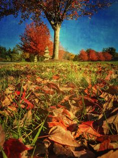 10 Ways To Take Better iPhone Photos From Interesting Viewpoints