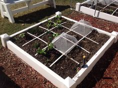 My spring Square Foot Garden is doing great ! I started these in my greenhouse