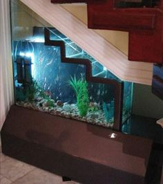 fish tank stairs! Basement?