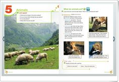 "Unidad 4 de Natural Science de 3º de Primaria: ""Animals"" Science And Nature, Natural, Animals, Teaching Resources, Unity, United States, Learning, Animais, Animales"