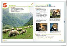 """Unidad 4 de Natural Science de 3º de Primaria: """"Animals"""""""