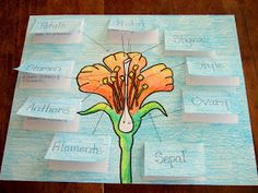 The Inspired Classroom: Flower Parts And Their Jobs: A Science Poster
