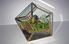 DIY Succulent Terrarium - The Interior Project