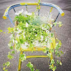 Tuunasin oman #kukkatuoli. Ostin kukat @jkukkatalo Naapuri lahjoitti tuolin. Tuunaa sinäkin osallistut jakamalla kuvan Facebookissa Instagramissa tai Twitterissä ja lisäämällä kuvatekstiin hashtagin #kukkatuoli. Kisa 7.8. asti. Palkintona 100 euron lahjakortti Järvenpään Kukkataloon @jkukkatalo #tuunaa #iloitse #kierrätä #kesäkukat #järvenpää #hyväjäke #futuremarja Instagram Posts, Plants, Plant, Planets