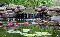 garden pond with small waterfall