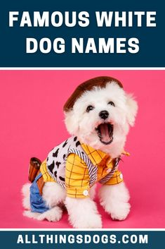 White dogs have made their way through pop culture over the years, in headlines, television, movies, books, and more. If you need some name inspiration for your new furry friend, check out our list of some famous white dog names.  #whitedognames #famouswhitedognames #popularwhitedognames White Puppies, White Dogs, Millionaire Lifestyle, Best Dog Names, Dream Symbols, Dream Meanings, Puppy Biting, Disney Dogs, Dog Training Tips