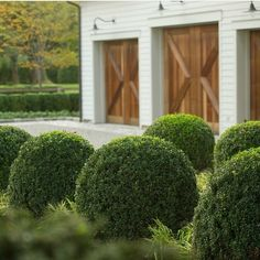 the natural timber against the white 'pops' in just the right way. green foliage, white pebbles... perfect.