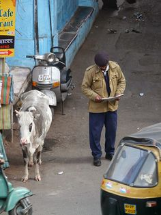 Cow waits for traffic to clear at Jagdish Mandir temple, Udaipur, Rajasthan, India. © 2014 a kiwindian couple.