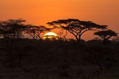 serengeti 13 mars - Naturfotograf Hasse Andersson
