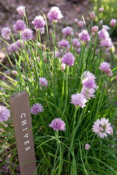 Traditional Landscape by Lucy Call - DIY Garden Markers Best Herbs To Grow, Growing Herbs, Plant Markers, Garden Markers, Herb Garden In Kitchen, Garden Labels, Traditional Landscape, Herbs Indoors, Garden Theme