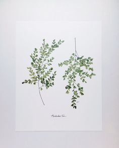 Fern Art Print — Carleigh Courey Design