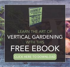 Learn The Art Of Vertical Gardening With This FREE eBook!