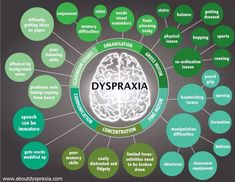 Apraxia of speech (also known as verbal dyspraxia) is one of a group of interrelated disorders under the umbrella category of dyspraxia. This chart shows how dyspraxia can affect various motor func...