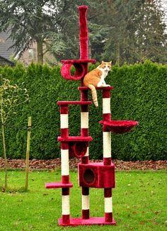 nanook Katzenkratzbaum Kratzbaum TINKA 5 – 250 cm – deckenhoch mit Deckenspanner, Höhle und Liegemulde – Brombeere - http://www.kratzbaum-bestellen.de/produkt/nanook-katzenkratzbaum-kratzbaum-tinka-5-250-cm-deckenhoch-mit-deckenspanner-hoehle-und-liegemulde-brombeere/